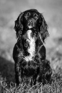 Dog Photography by Gerry Slade-6201