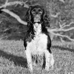 Dog Photography by Gerry Slade-6683