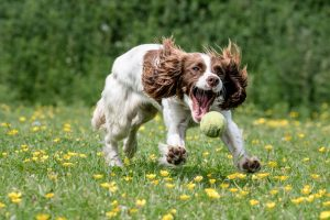 Dog Photography by Gerry Slade-715