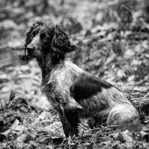 Dog Photography by Gerry Slade--9