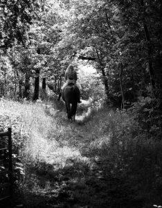 Horse Photography Gerry Slade-137