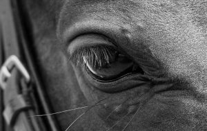Horse Photography Gerry Slade-3866