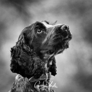 Photography Gerry Slade--18